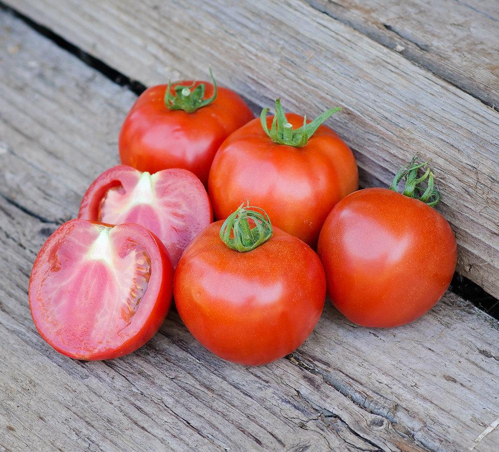 Quali T 23 Tomato