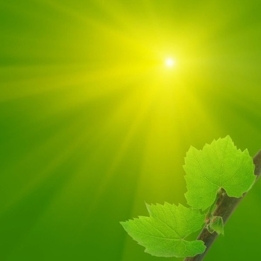 hd_picture_5_of_the_leaves_under_the_sun_169154-1.jpg