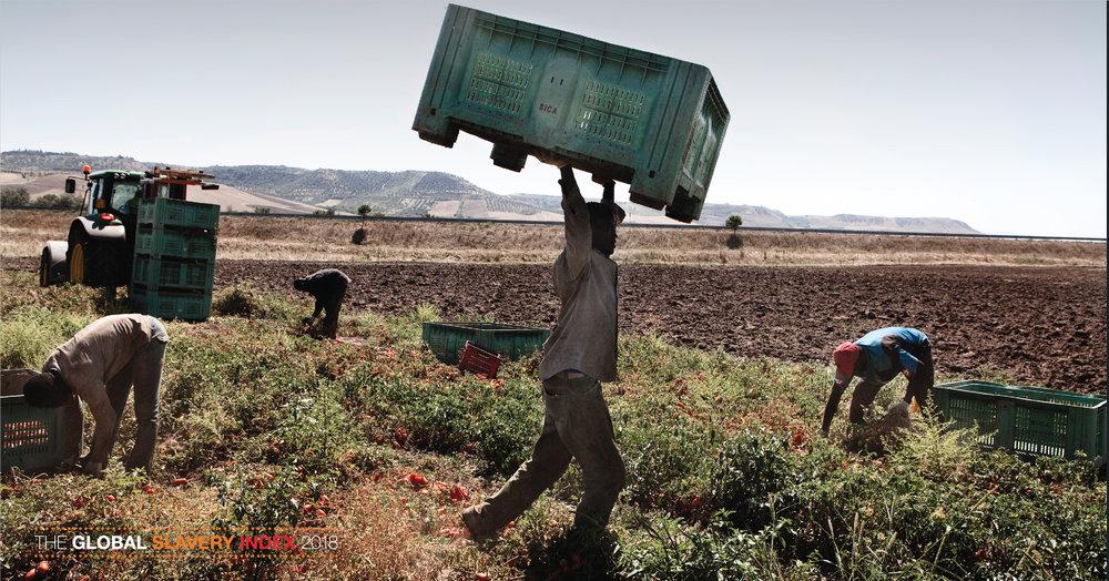 Photo courtesy of Global Slavery Index