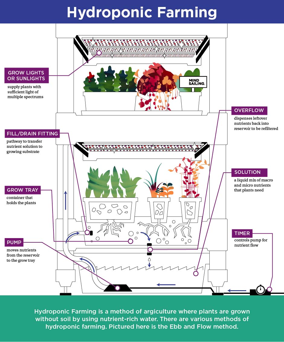 Hydroponic Farming Infographic.jpg