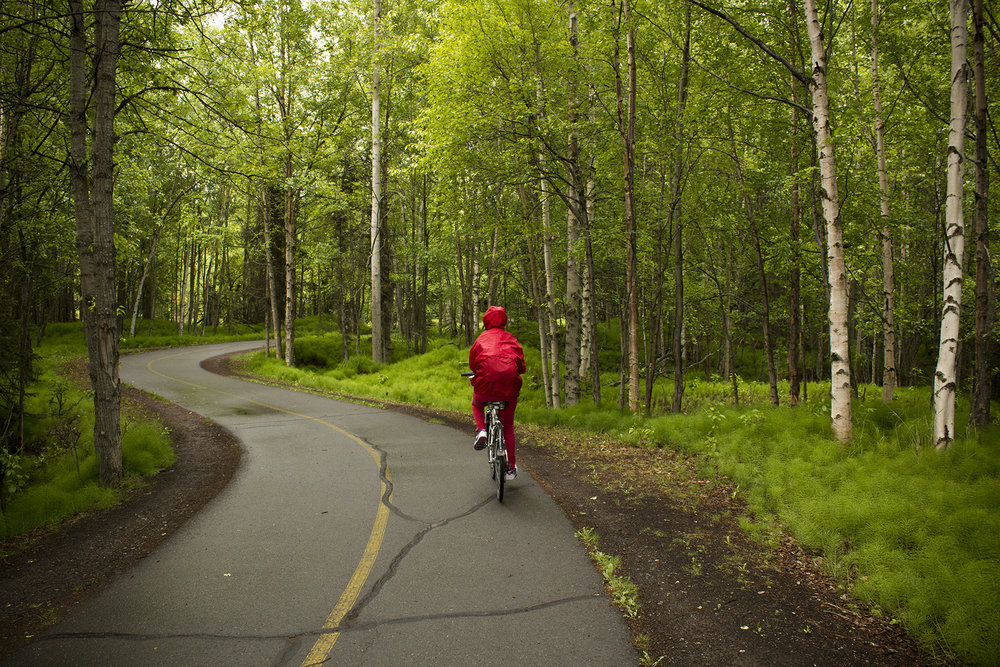 Biking through trees on Tony Knowles Coastal Trail