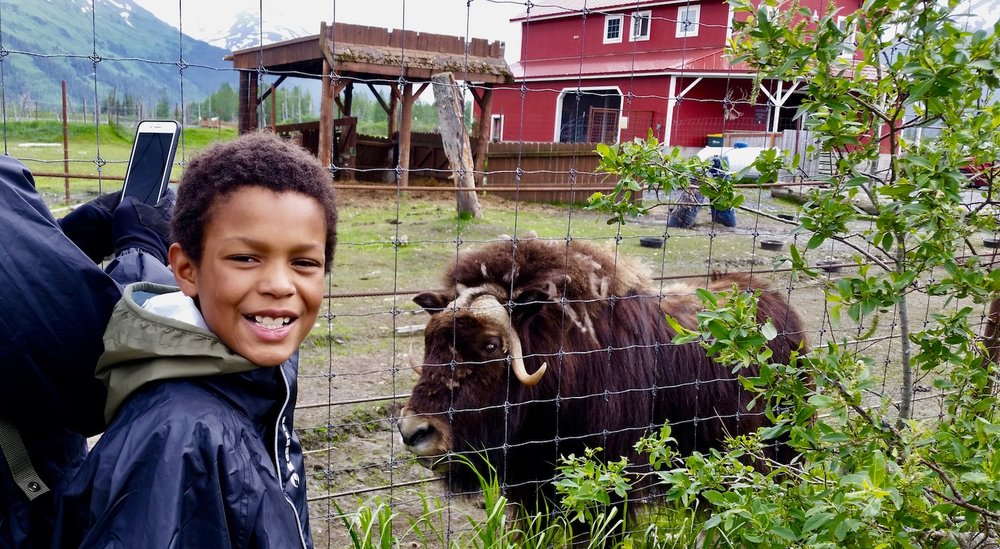 kid with a musk ox at the wildlife conservation center.jpg