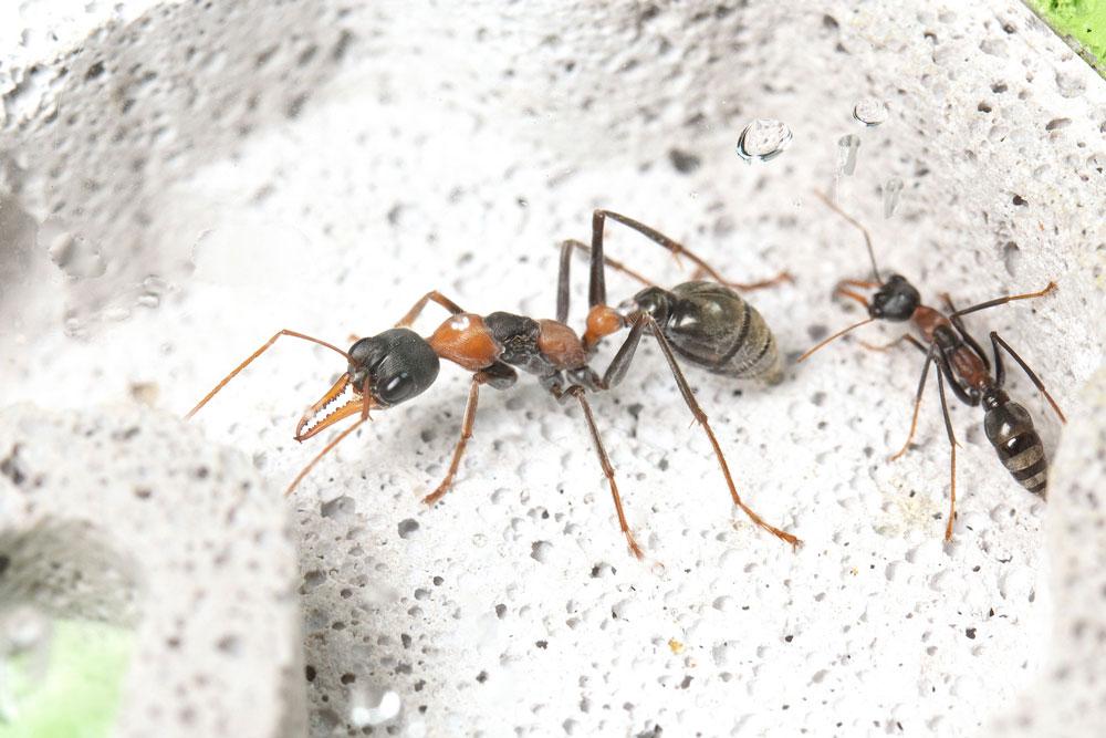 Ants03.jpg