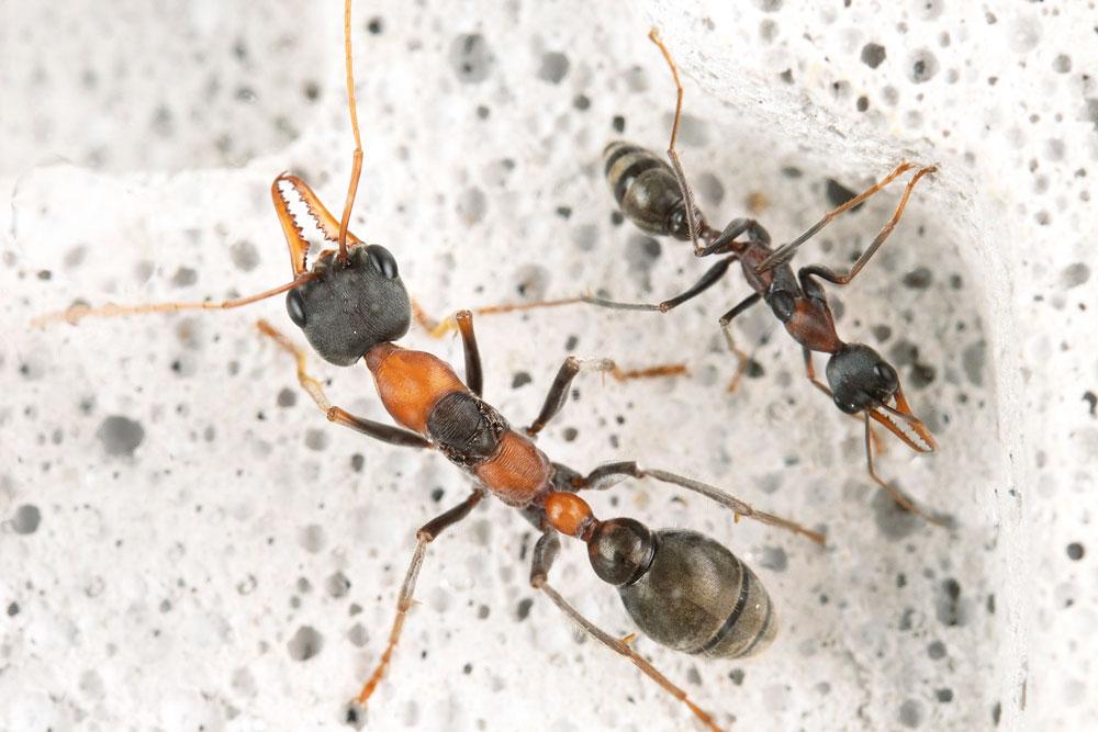 Ants01.jpg