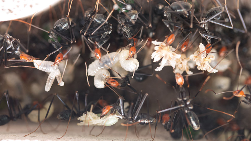 Spider-Ant-Ytong-02.jpg