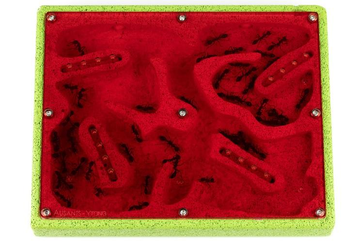 aus-ants-ytong-ant-farm (4).jpg