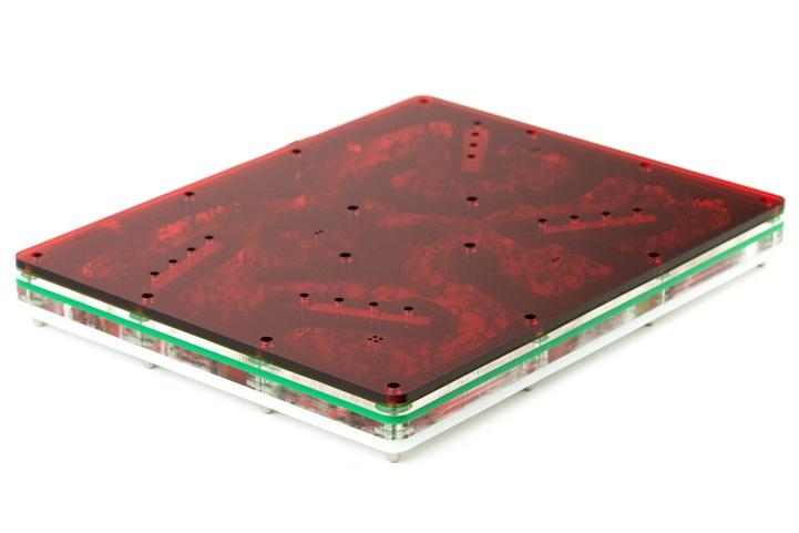 aus-ants-acrylic-ant-farm (5).jpg