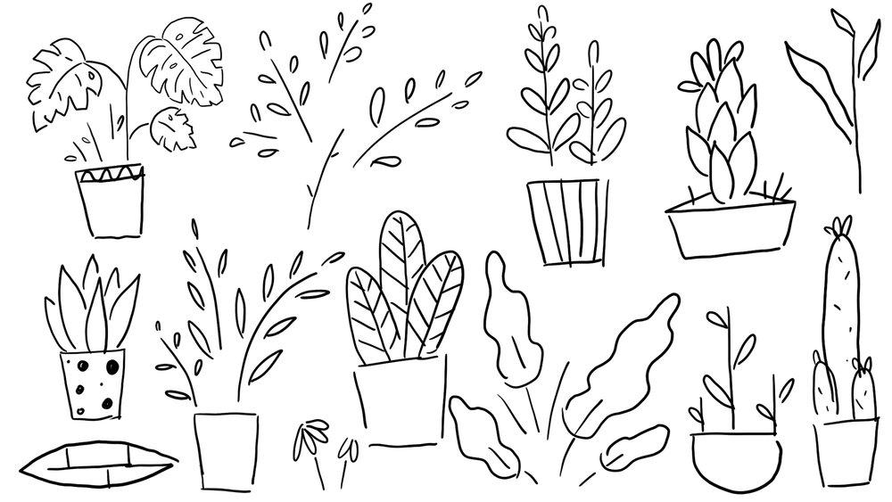 plant 3.jpg