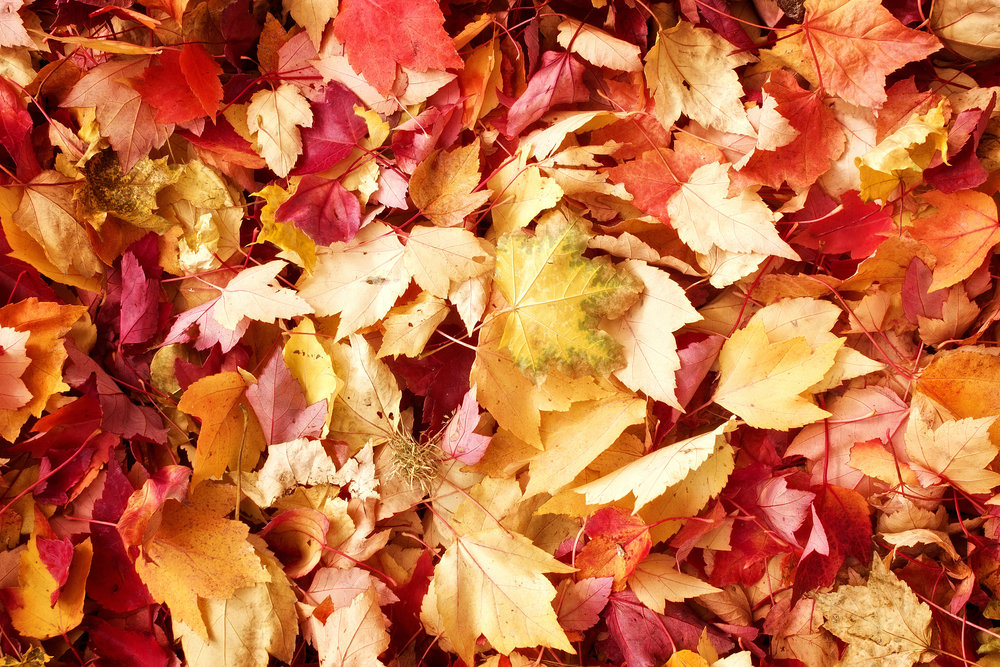 fall-leaves-background_GyfS43PO.jpg