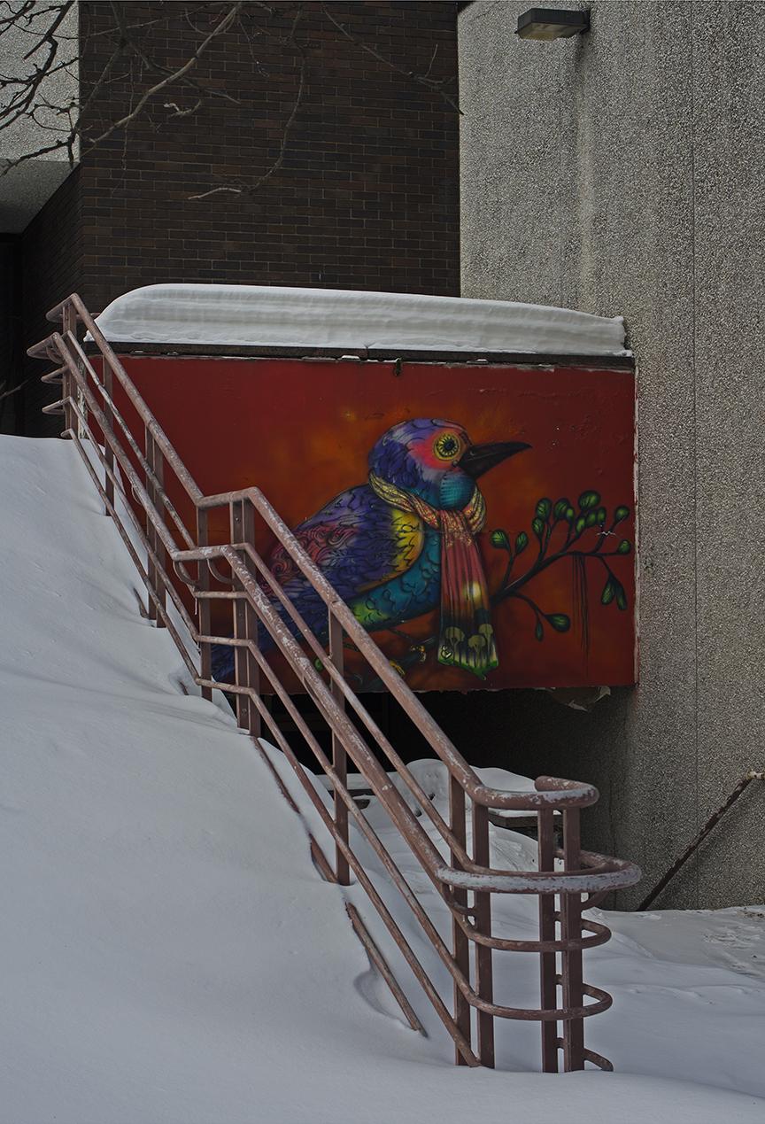Cold Bird +.jpg