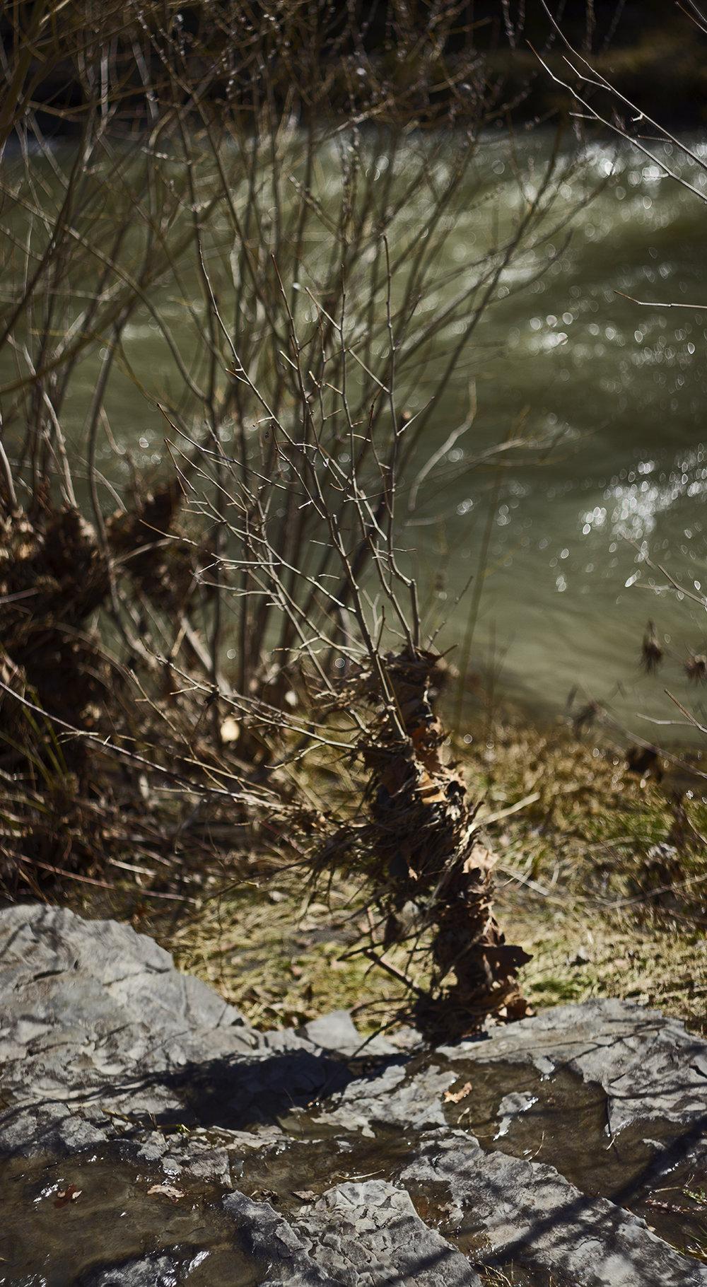River Nest - 1.jpg