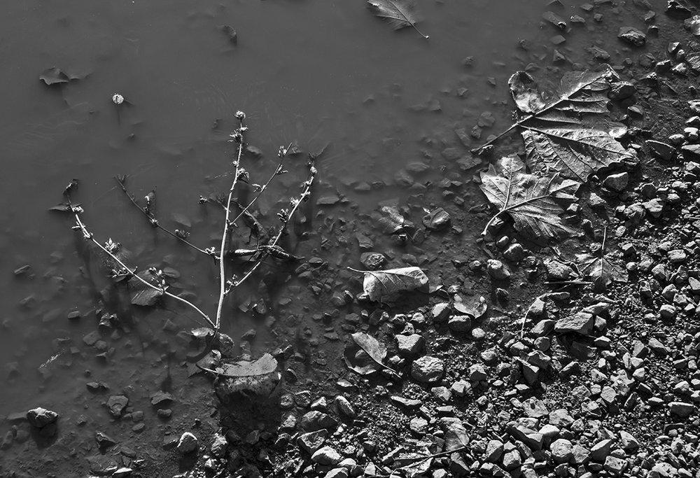 In the Mud - 1 - BandW.jpg