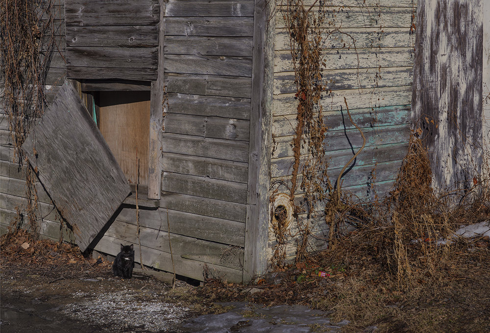 Alley Cat - 2.jpg