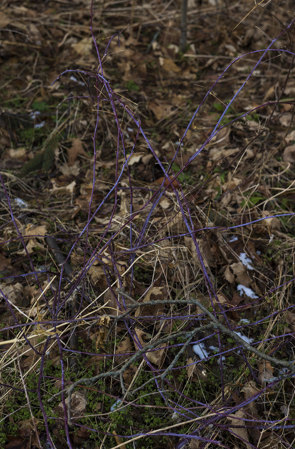 Winter Lilac.jpg