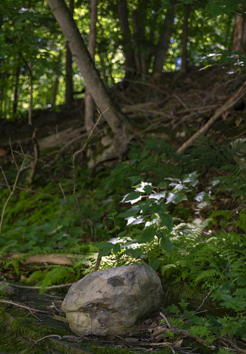 Creek Skull - 1.jpg