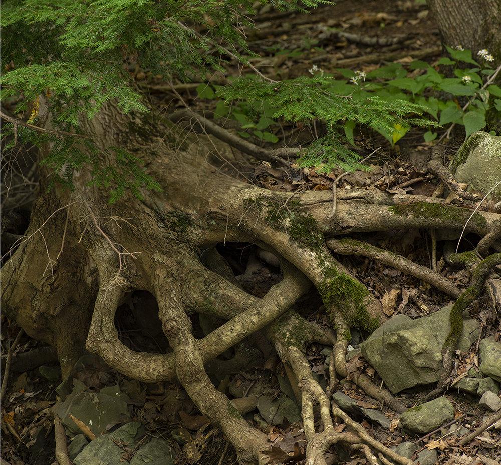 Creek Knot.jpg
