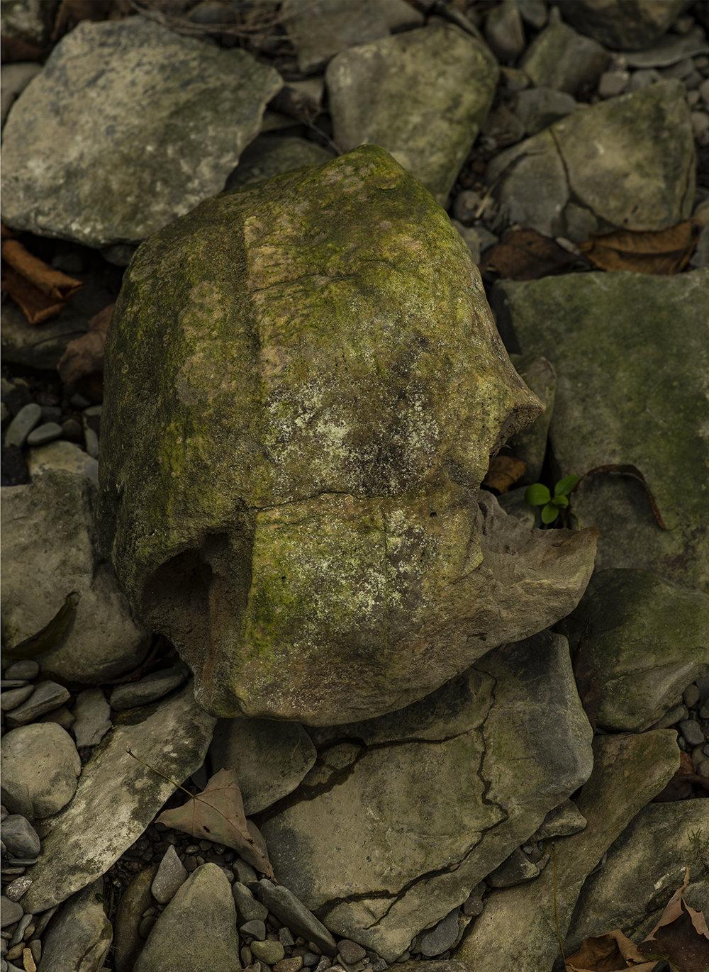 Creek Skull - 4.jpg