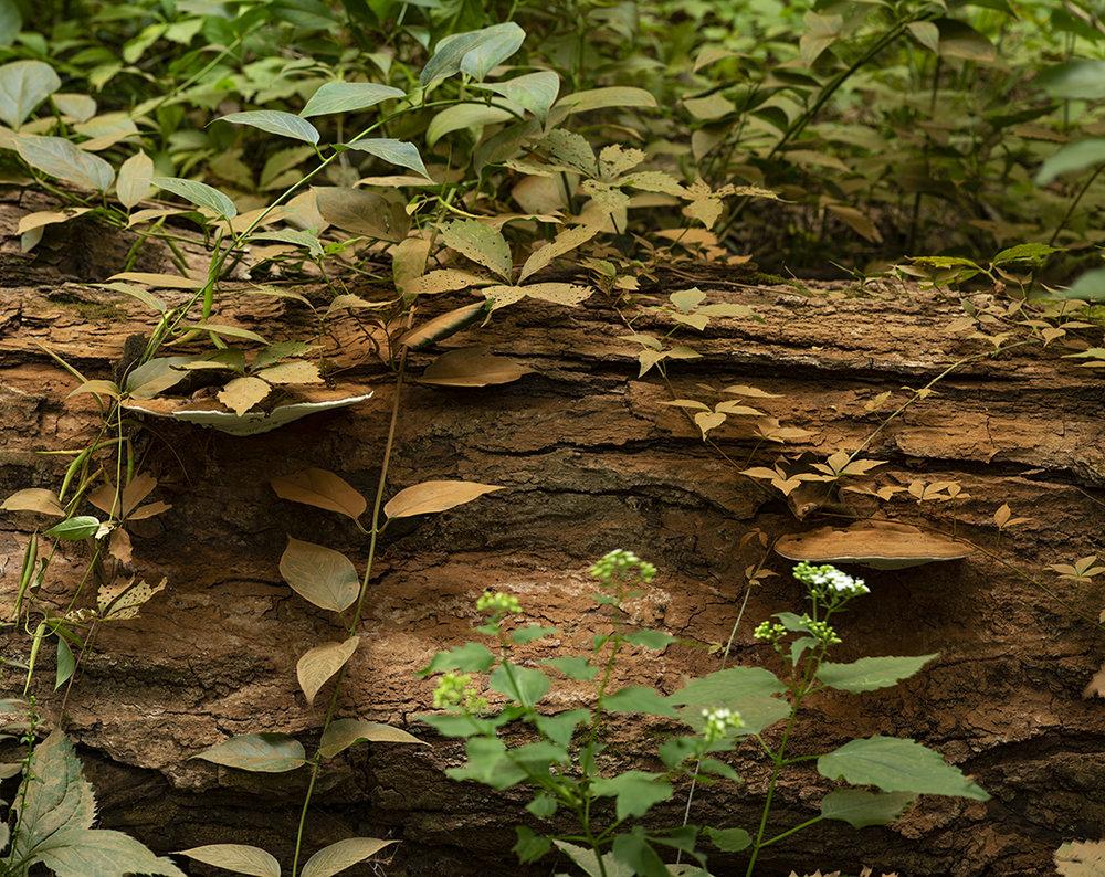 Dead Tree Mushrooms and Red Dust - 1.jpg