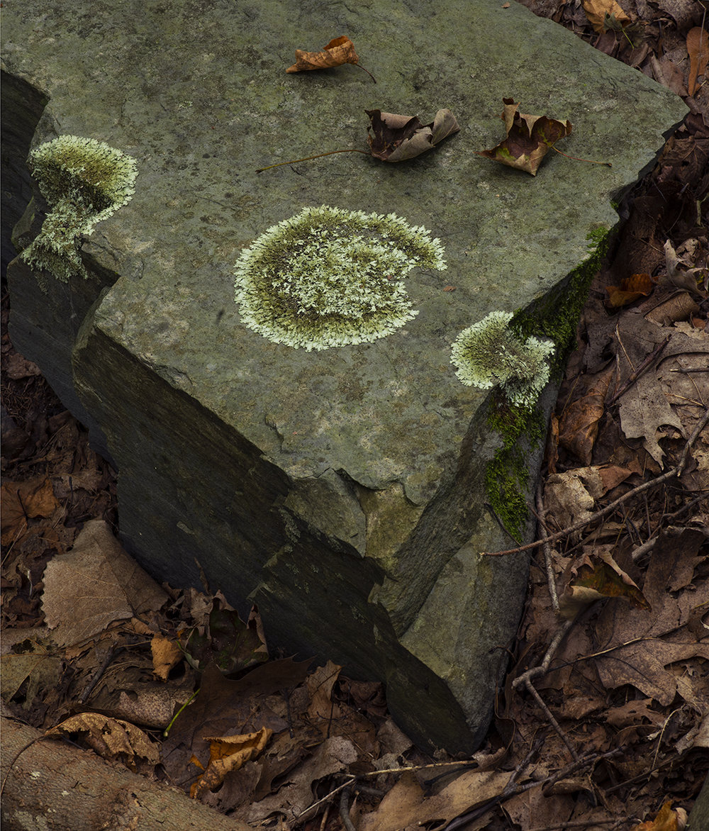 Moss Escape - 2.jpg