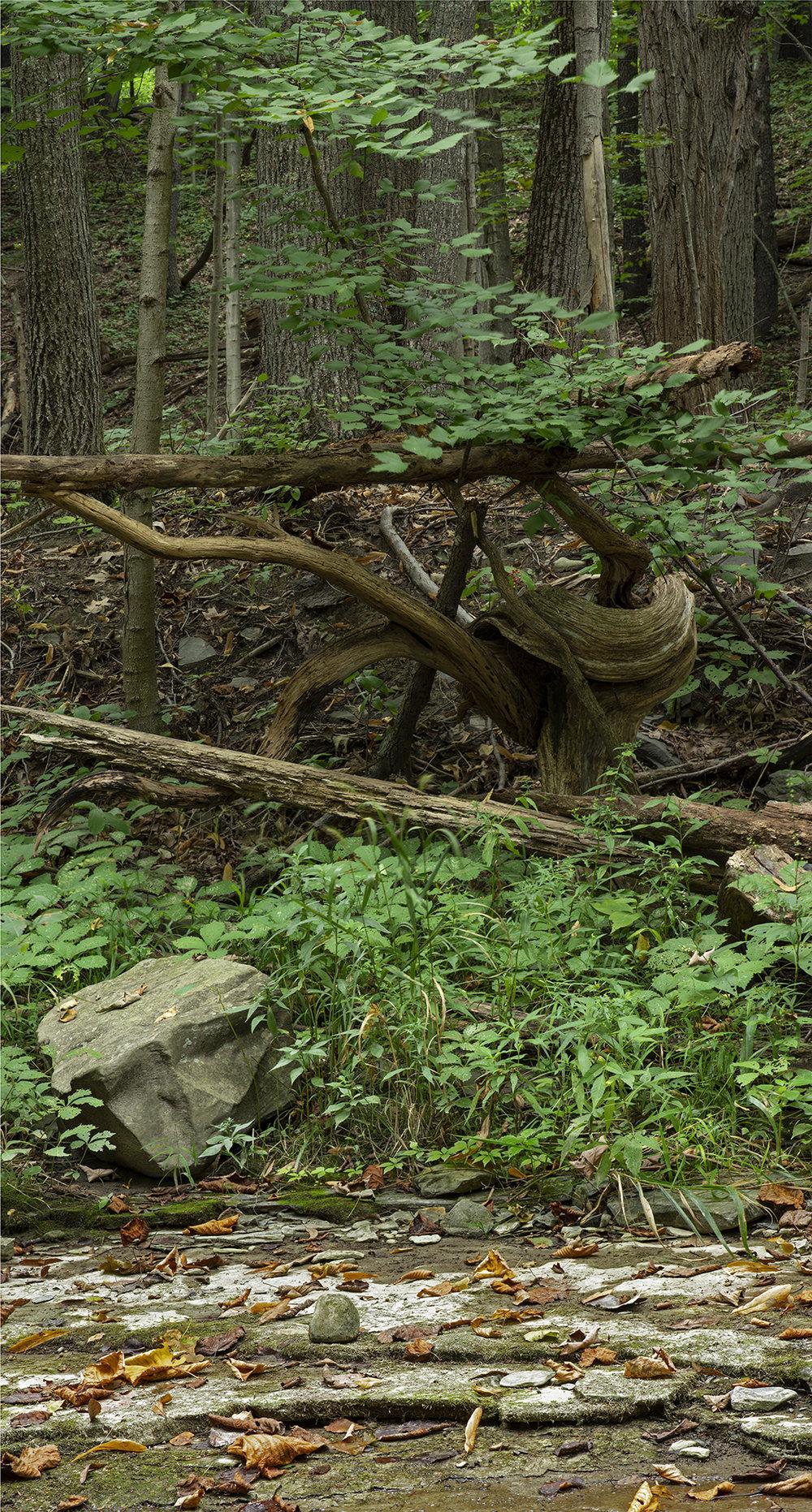 Tree Curl.jpg
