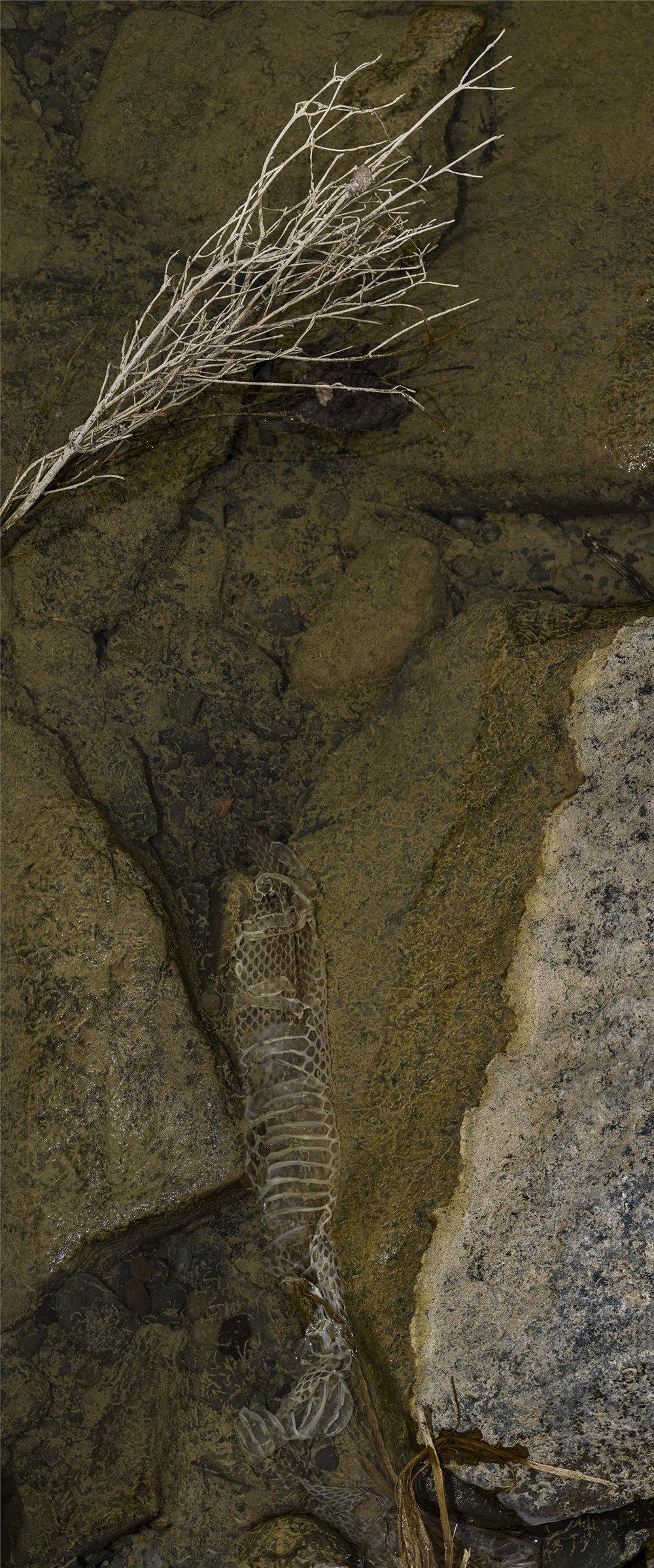 Snake Skin - 4.jpg