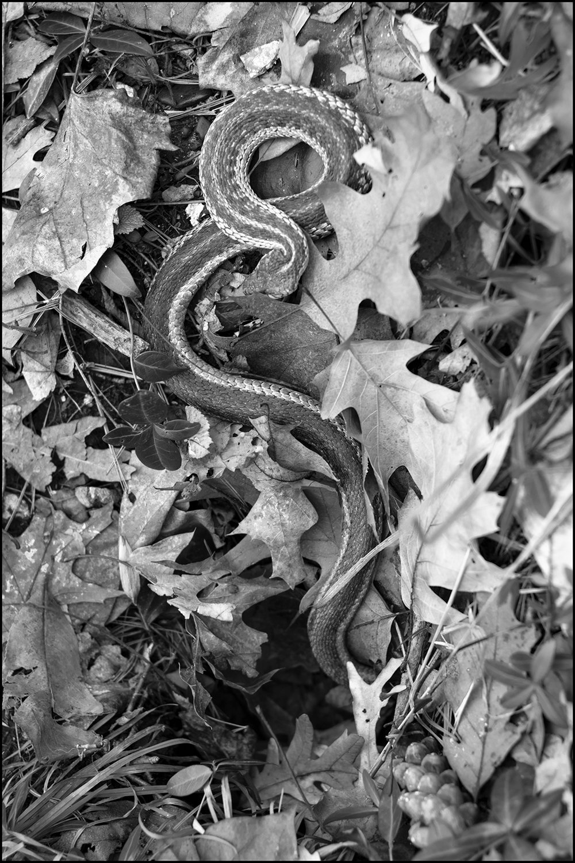 The Snake - 2 - B&W.jpg