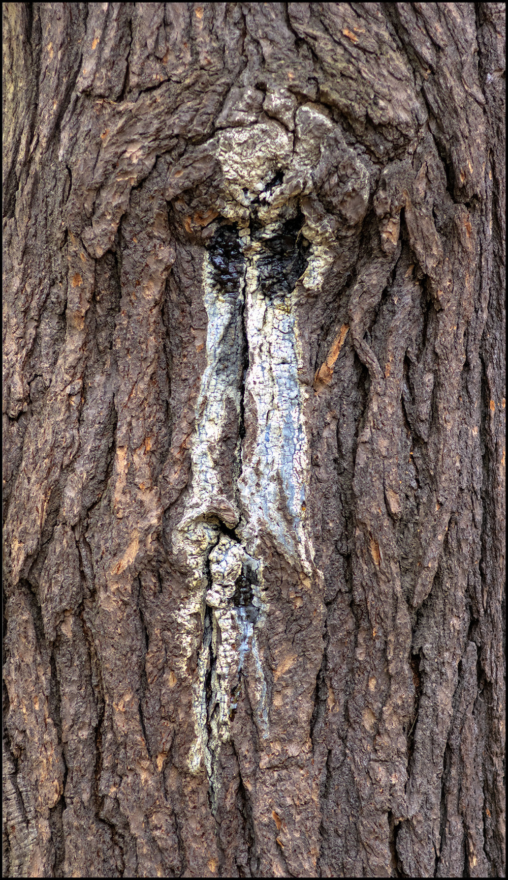Tree Character +.jpg