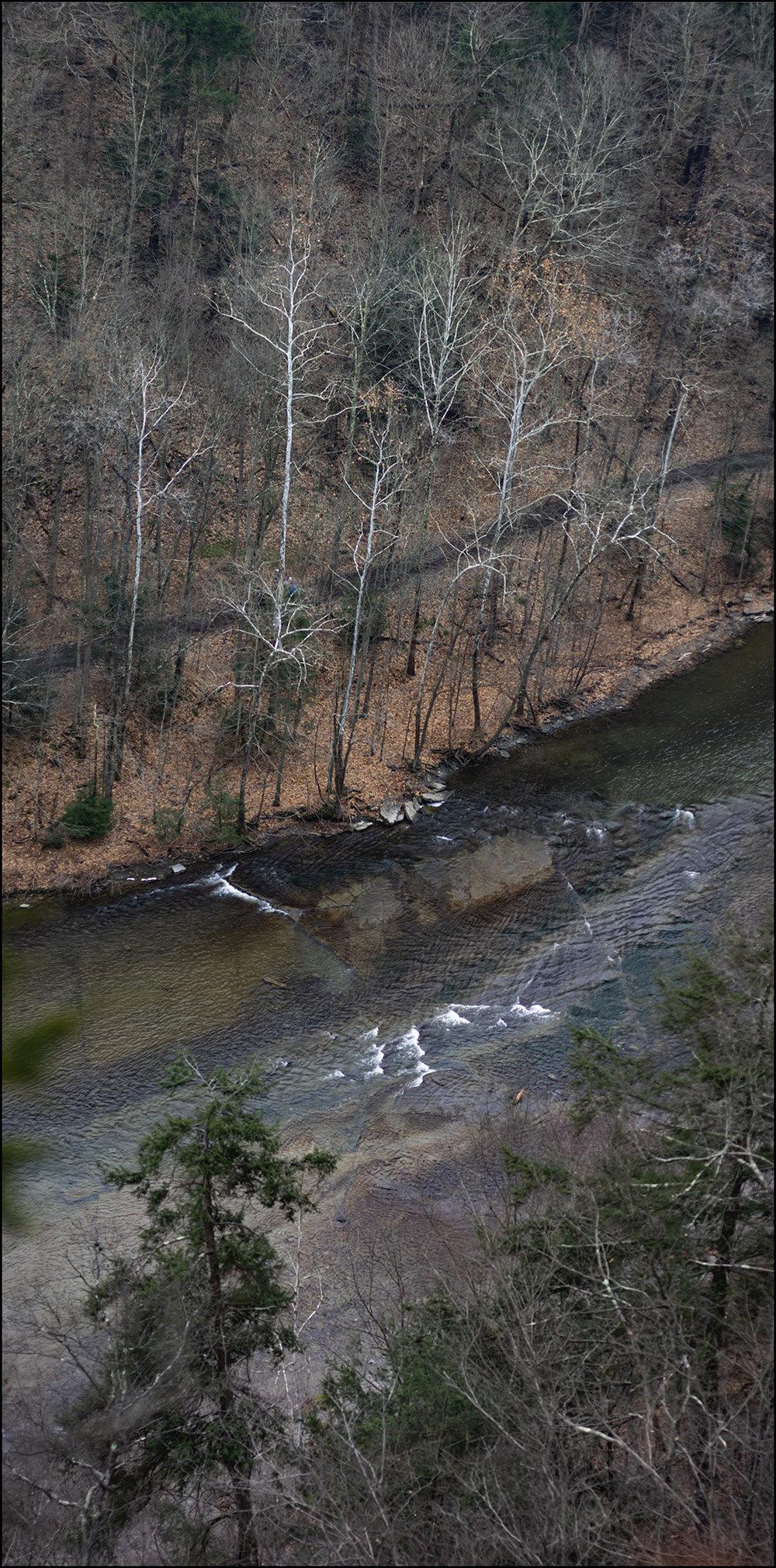 White Birches Down Below - 2 +.jpg