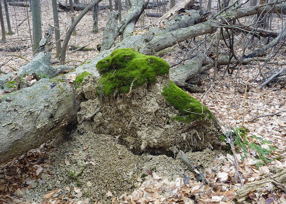 Moss +.jpg