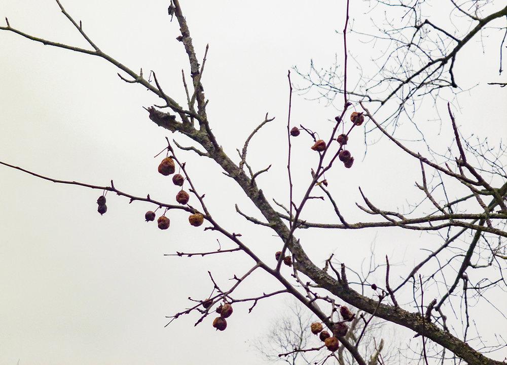 Old Berries.jpg