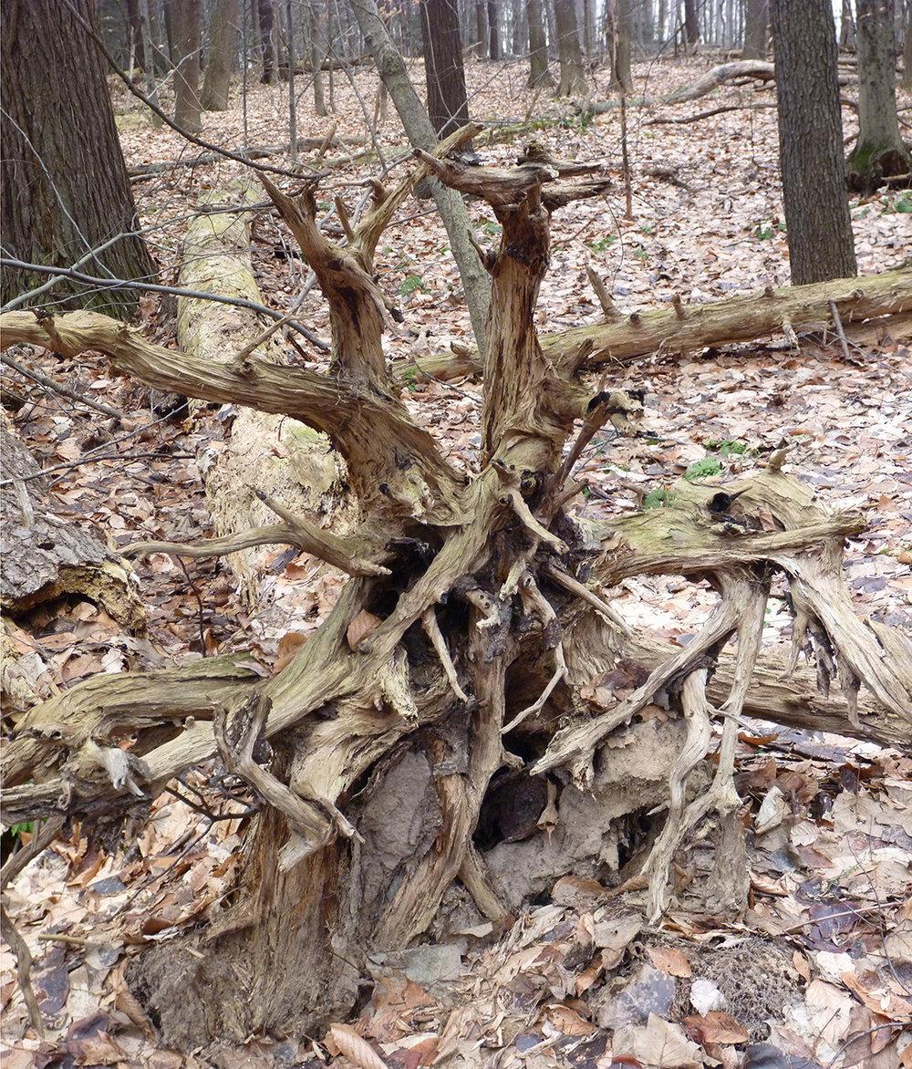 Tree Trunk - 6.jpg