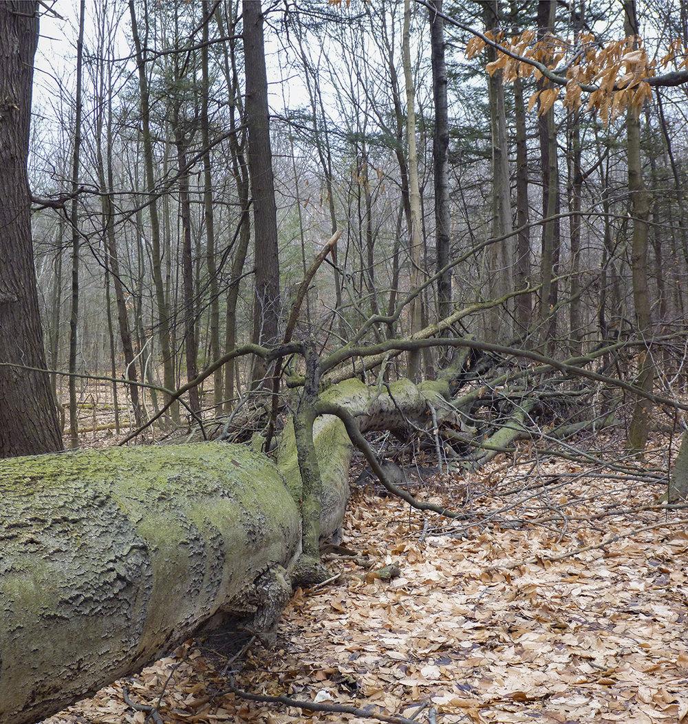 Tree Trunk - 10.jpg