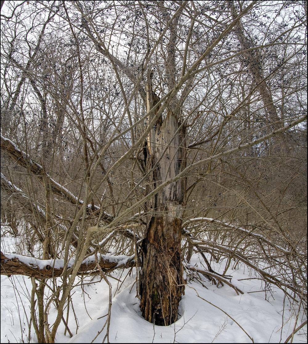 Broken Tree - 1.jpg