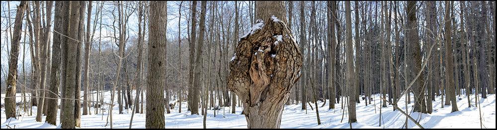 Tree Knot - 1.jpg