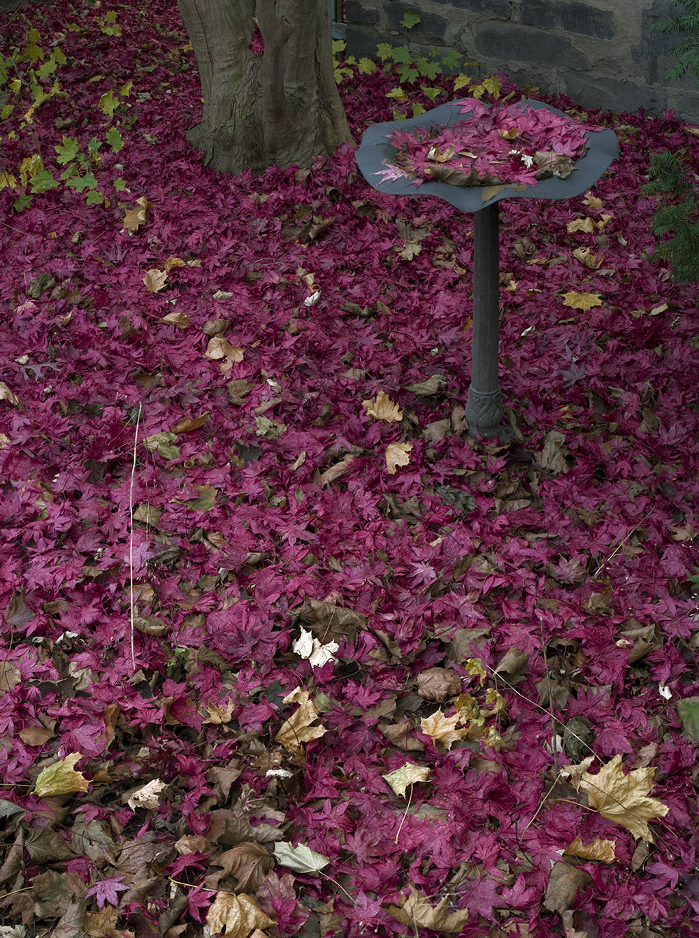 Red Leaf Fountain - 6 +.jpg