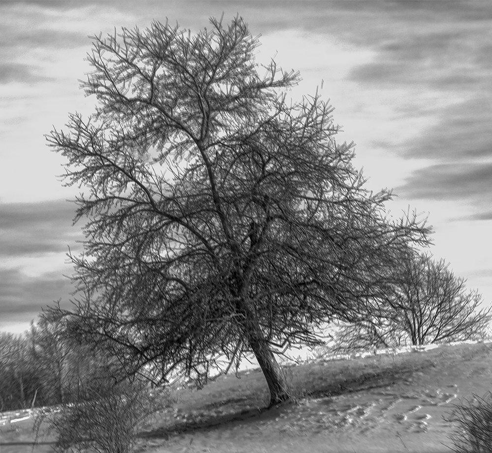 Inclined Tree - 1 + B&W.jpg