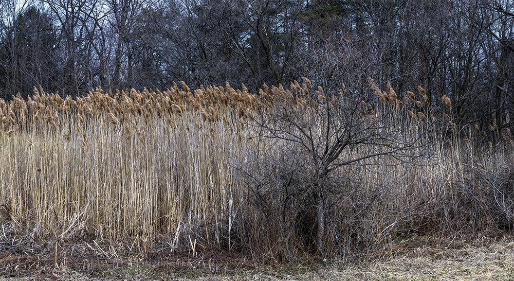 Tall Grasses - 2 +.jpg