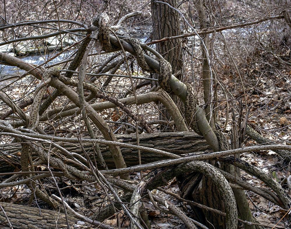 Natural Knots - 15 +.jpg