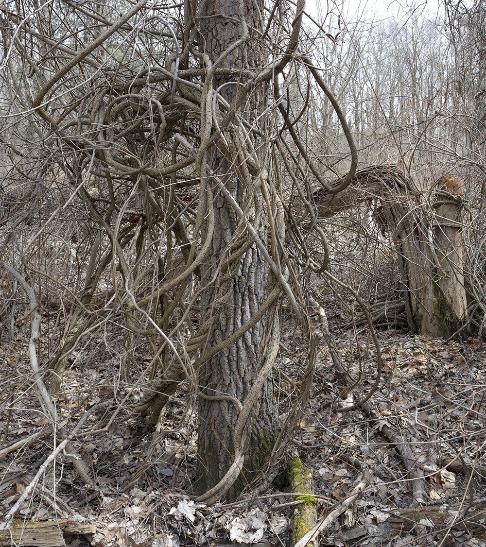 Natural Knots - 9.jpg
