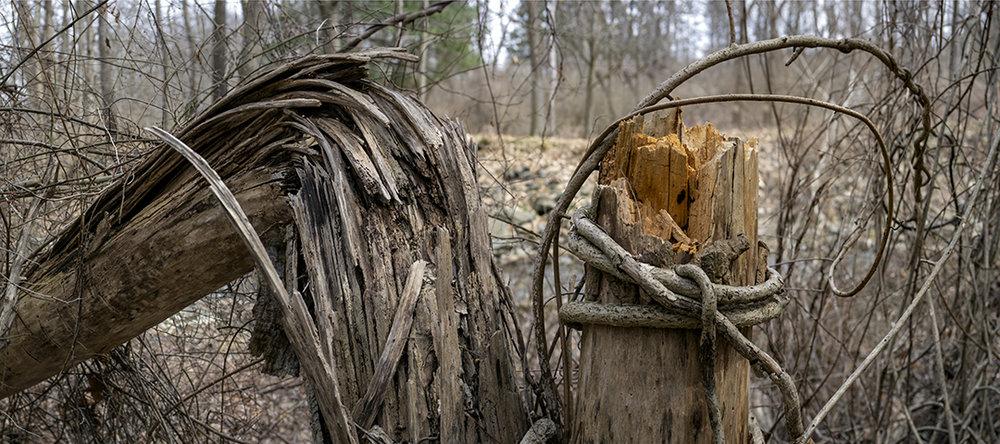 Natural Knots - 3 +.jpg