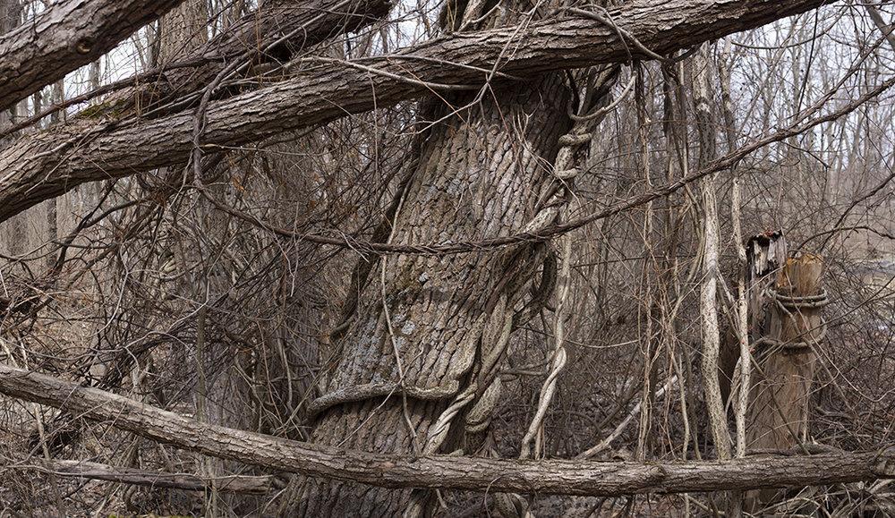 Natural Knots - 2.jpg