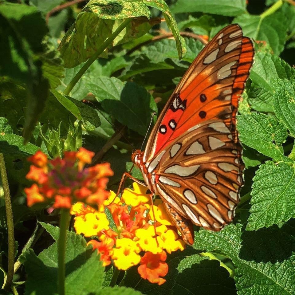 Brownwood Park Community Garden Flower Butterfly