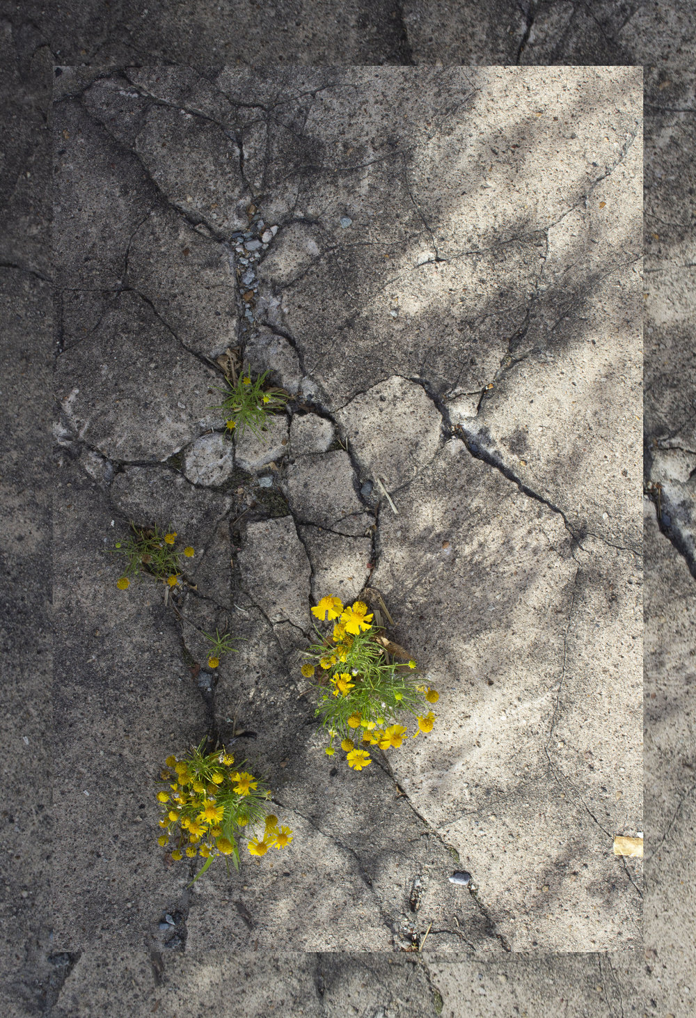 flowers_n_concrete-2.jpg