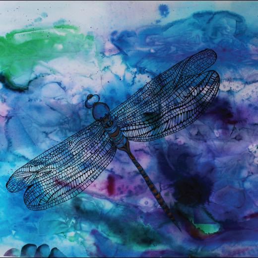 SACD_Dragonfly_dreams_web.png
