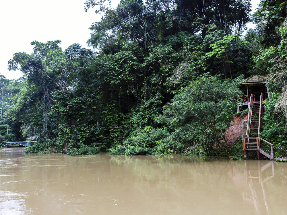 The landing for the biodiversity station   on the Tiputini River. The site, chosen in 1994, lies directly across the river from Yasuni – and a sea of oil.    (Maria Silva)