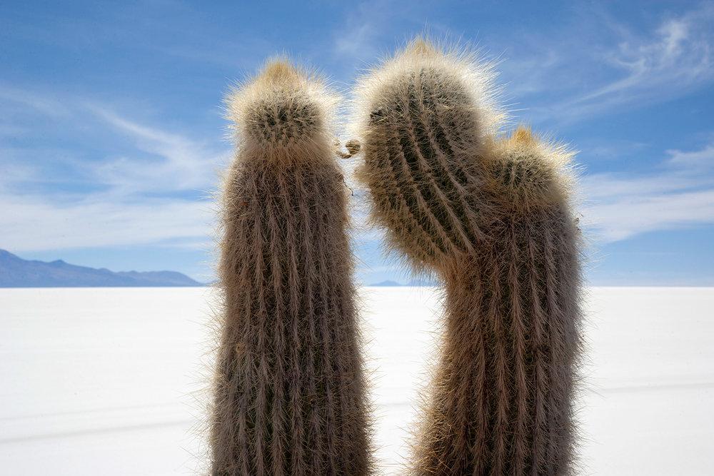 Cactii - Bolivia