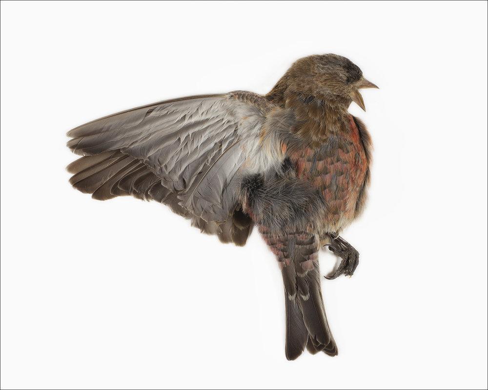 BIRDS05.jpg