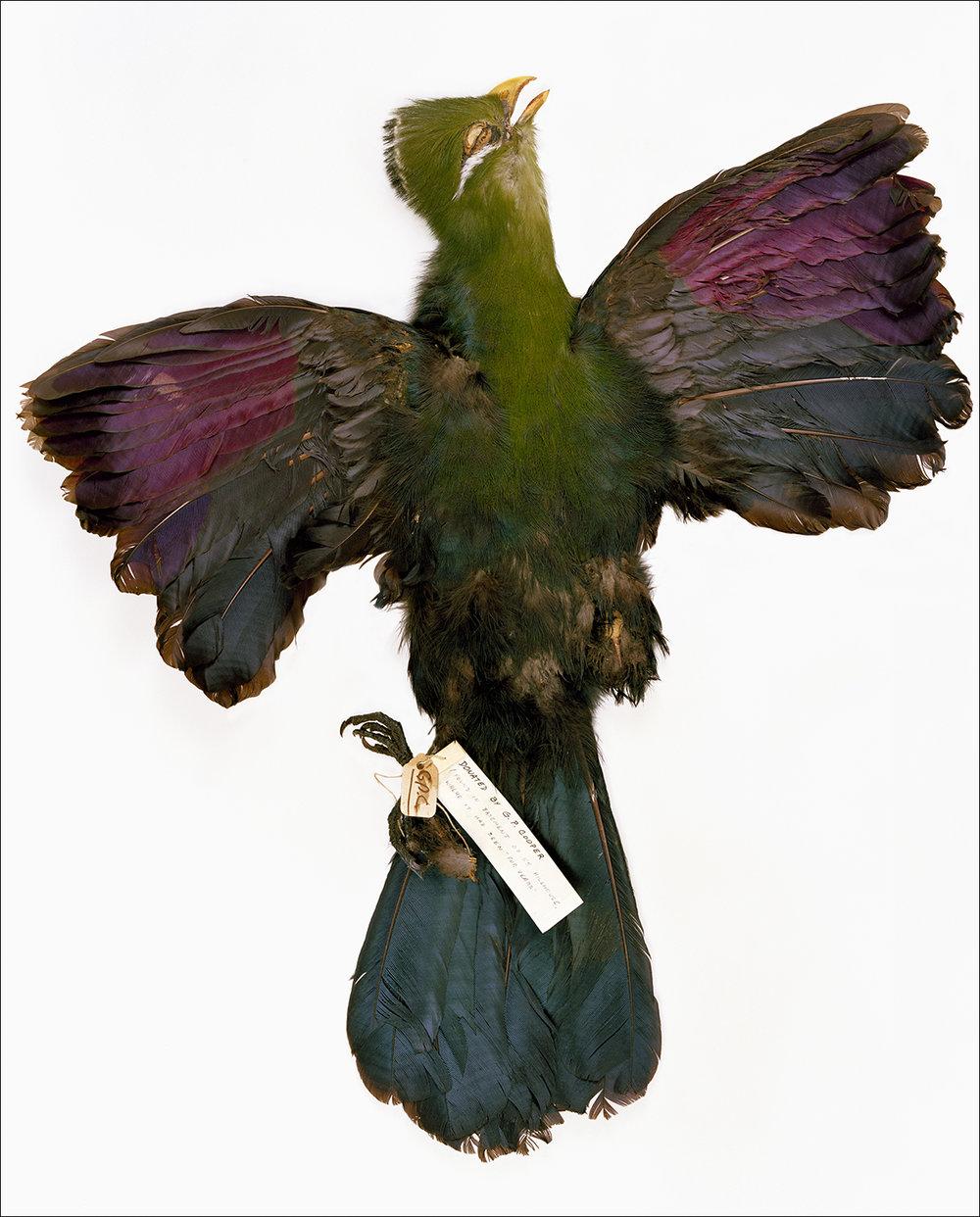 BIRDS02 (proper).jpg