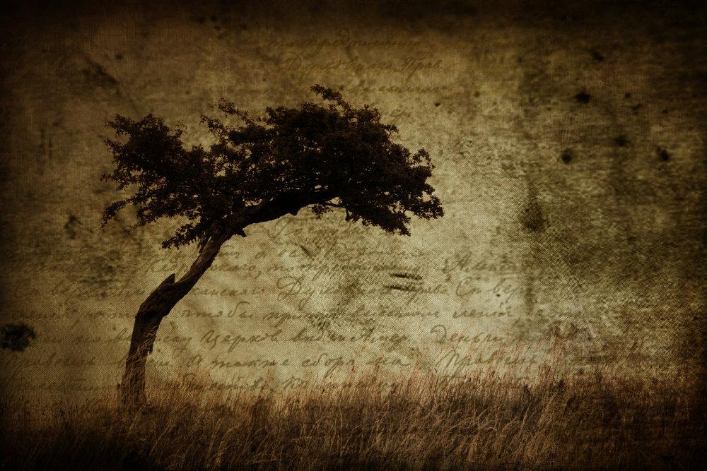 4539_tree.jpg