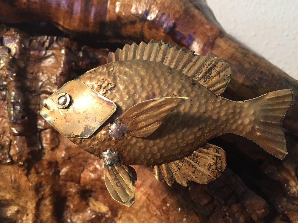 Brass Sunfish